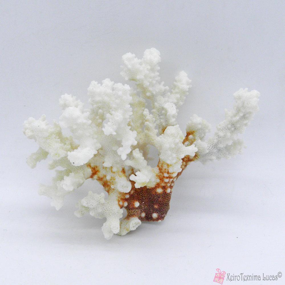 καλλιεργούμενο κοράλλι